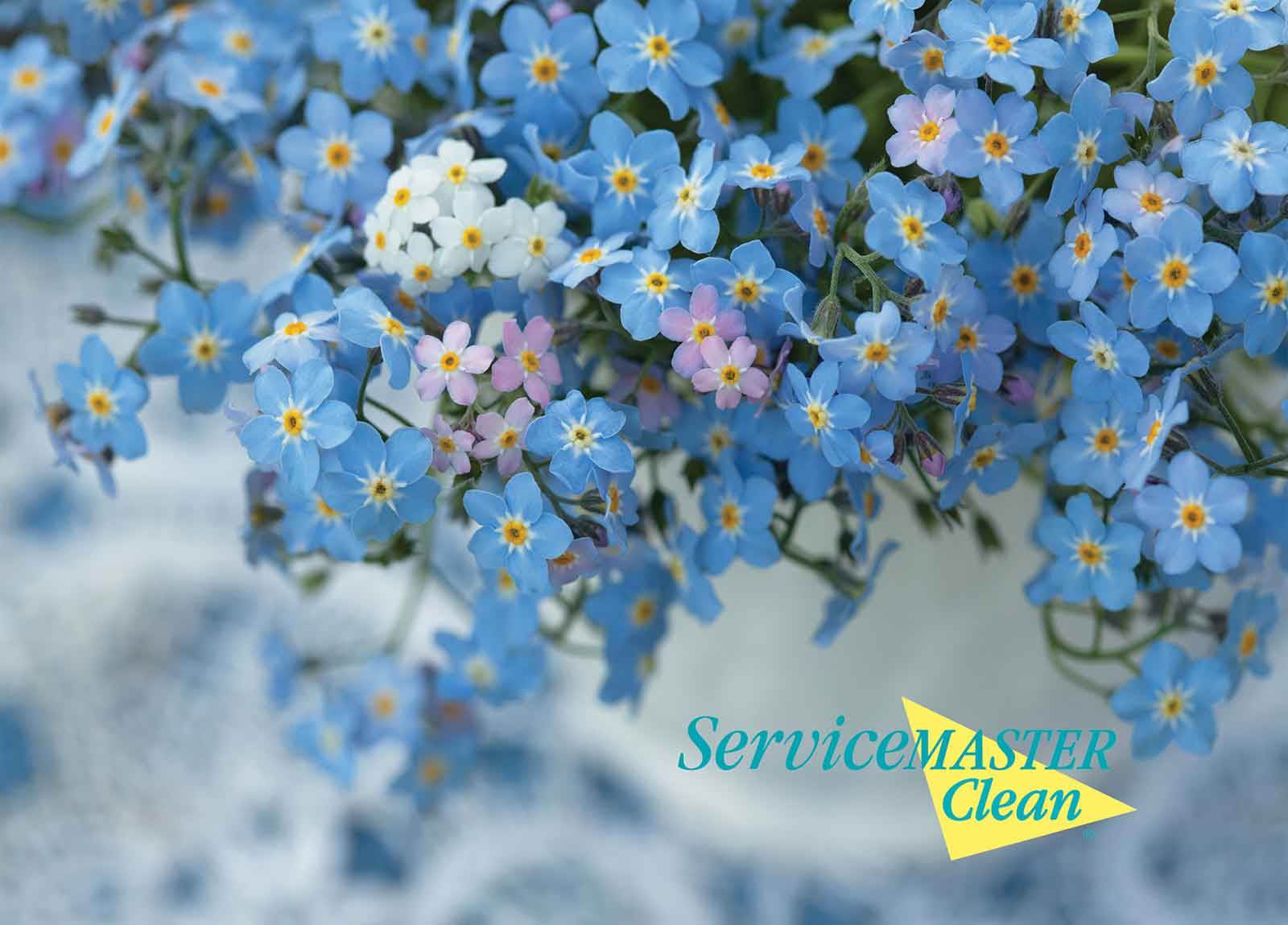 Spring Upholstery Cleaning Offers and Carpet Cleaning Offers