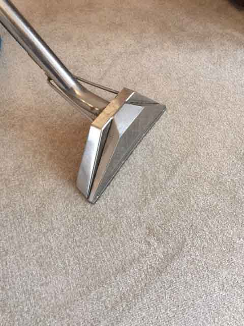 New home carpet cleaning in Torbay