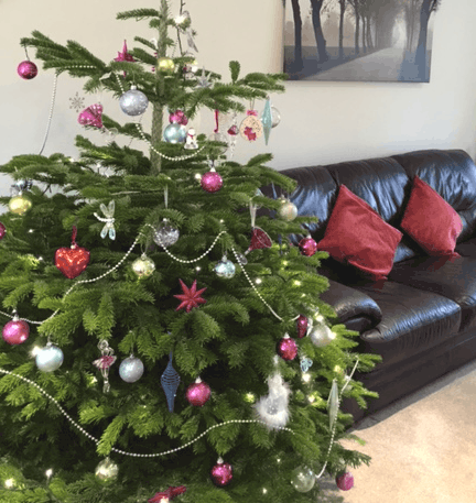 Tips for protecting your carpets and floors from your Christmas tree