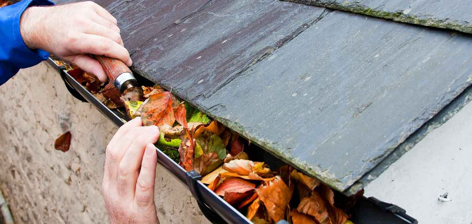 Window Cleaning and Gutter Cleaning in Exeter