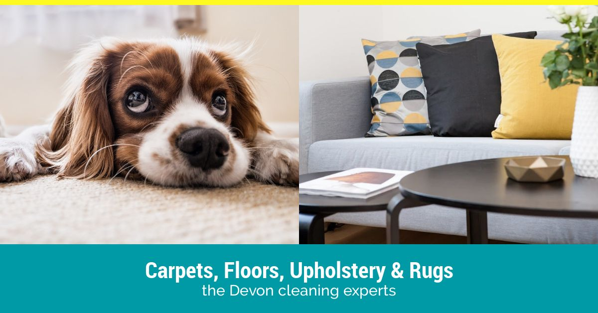 cleaner carpets